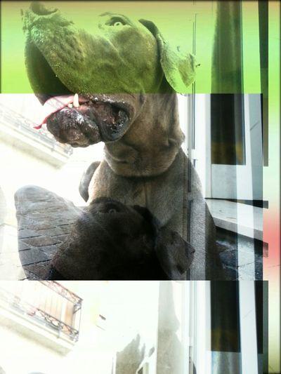 My Dog My Maria