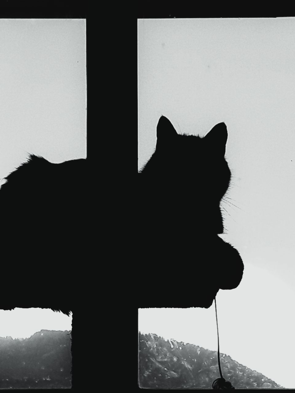 one animal, silhouette, animal themes, domestic cat, day, no people, mammal, outdoors, pets, mountain, nature, domestic animals, sky, close-up