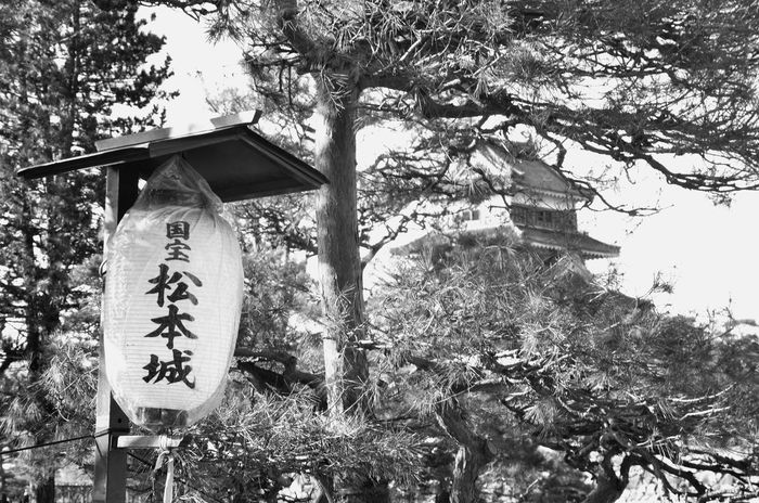 ちょうちん 国宝 松本城 Trees And Branches Japanese Castle Black And White Monochrome Travel Photography Snapshot