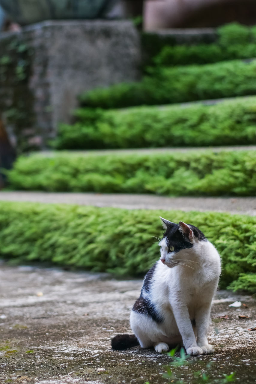 one animal, animal themes, pets, domestic animals, no people, mammal, domestic cat, day, outdoors, green color, plant, sitting