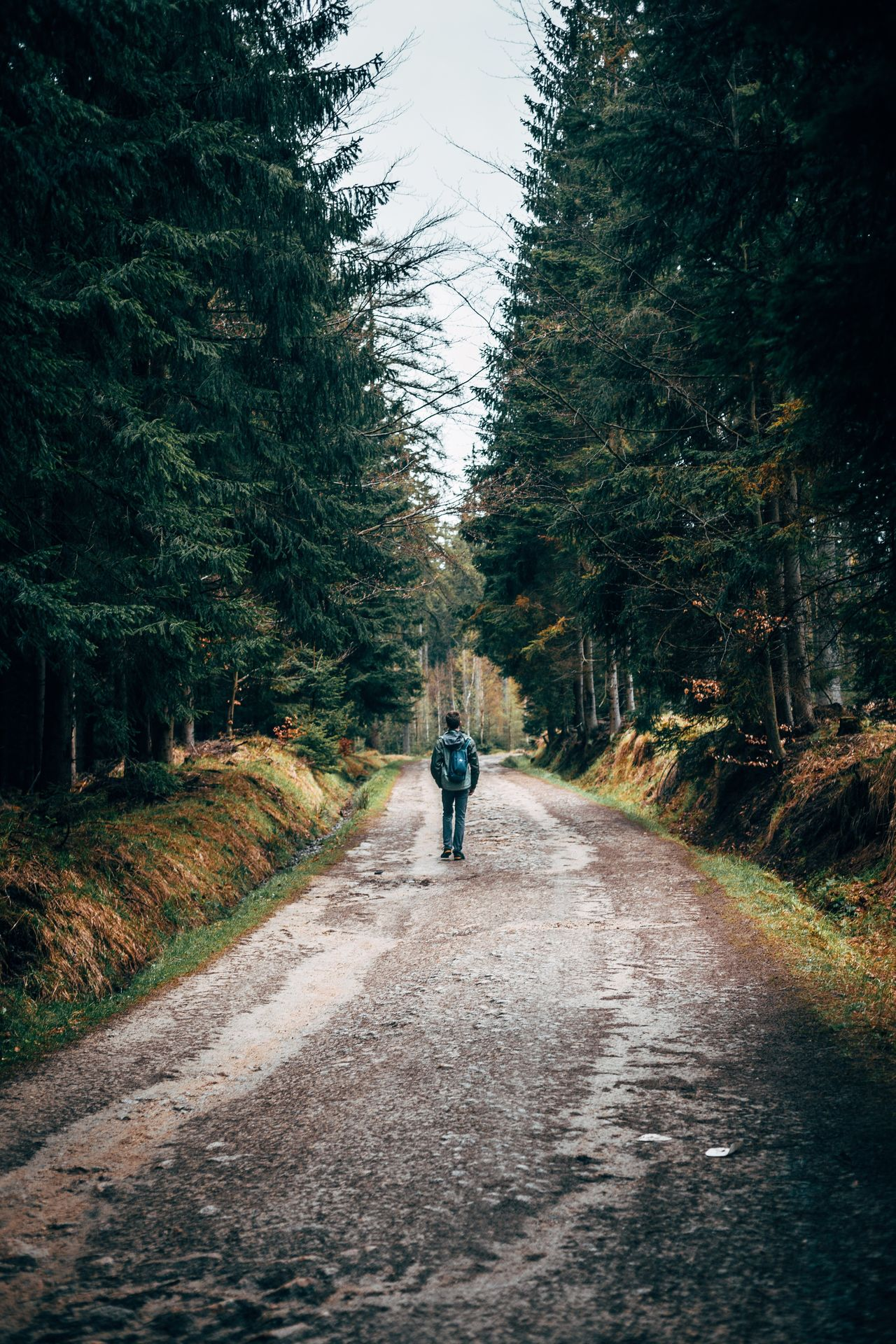 Exploring Poland. Poland The Way Forward Road Diminishing Perspective Rear View Walking Tree One Person Full Length Transportation Real People Day Nature Men Leisure Activity Lifestyles Outdoors Forest Beauty In Nature One Man Only Sky