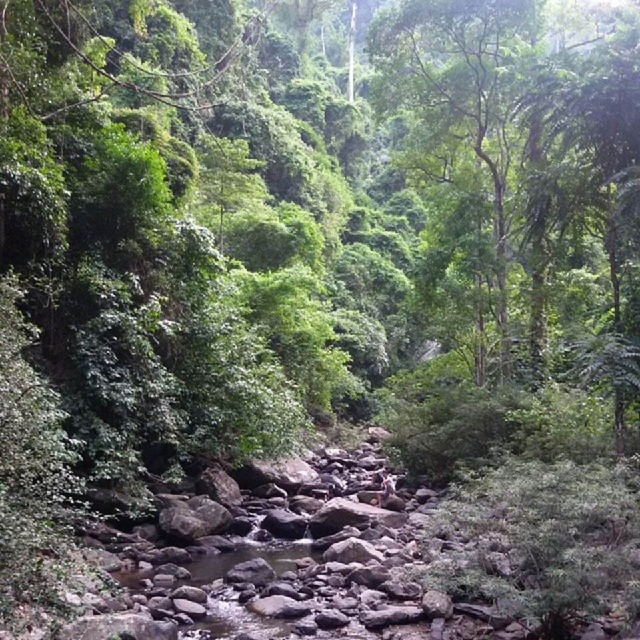 น้ำตกป่าละอู อุทยานแห่งชาติแก่งกะจาน ร่มรื่น ร่มเย็น เขียวขจี ????