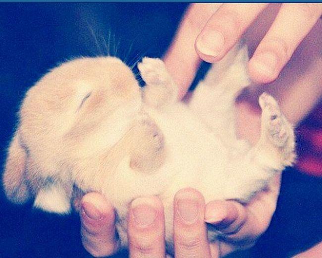 BabyPet Hasi♥ Hasi Häschen Hasen Süß *__* Süßi :* Süßi❤️