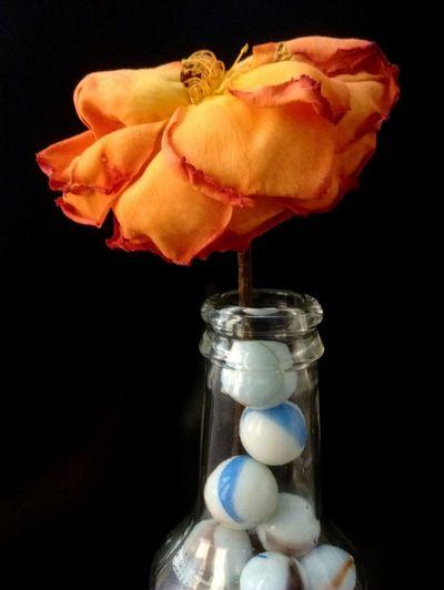 Rosa en la botella. Flower Jar Black Background No People Close-up Fragility Indoors  Day EyeEmMarket. Eyeemmarket EyeEm EyeEm Gallery EyeEm Nature Lover Flors/ Flowers