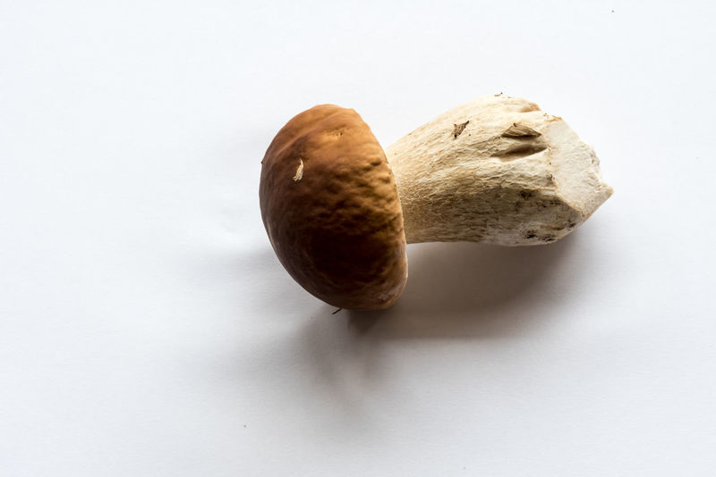 king bolete, Boletus edulis, Steinpilz Close-up Day Food Food And Drink Freshness Healthy Eating Indoors  No People Studio Shot White Background