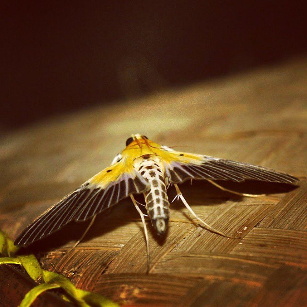 Merayap. Ngengat Butterflies Butterfly Kupukupu