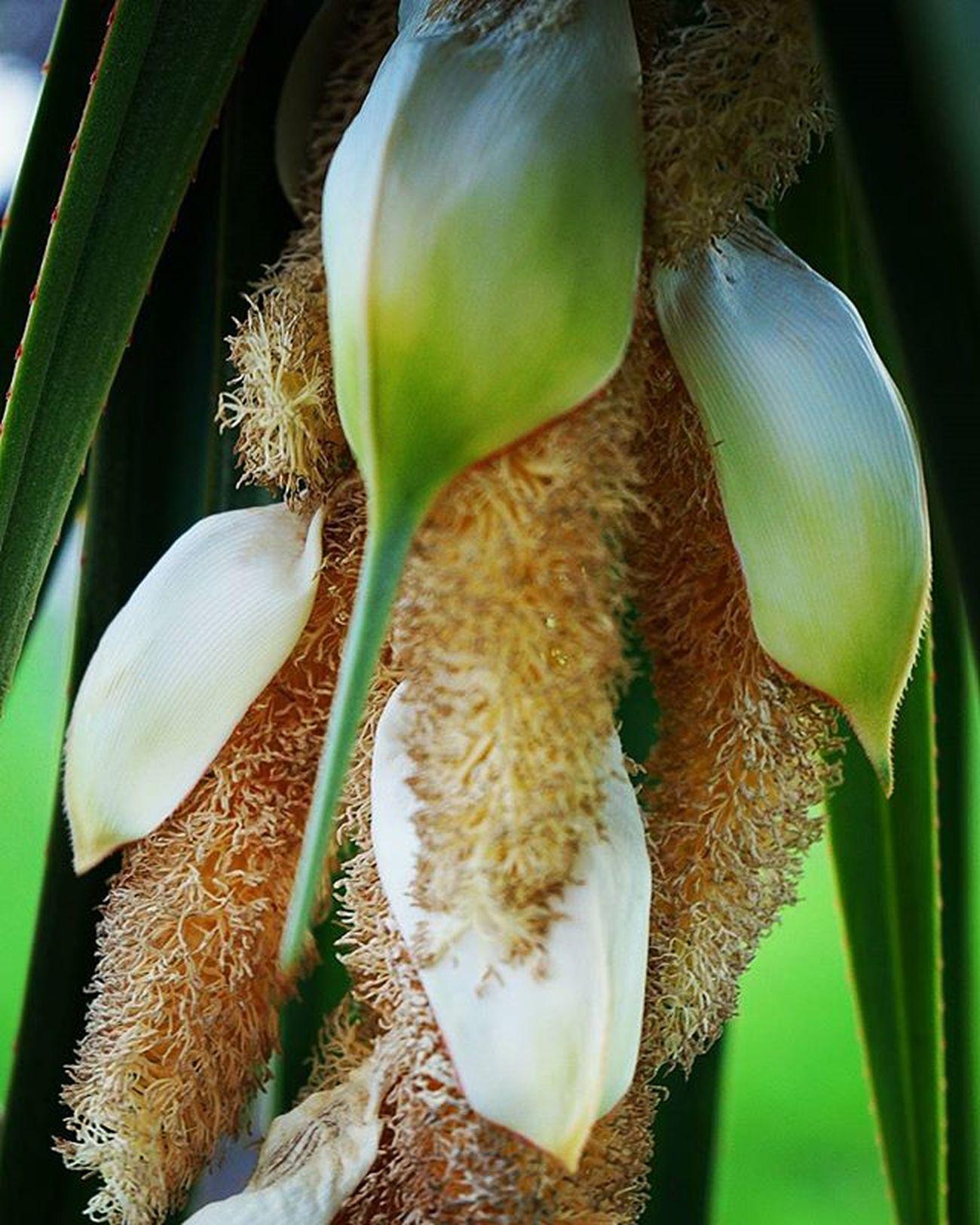 Naturelovers Nature Ig_naturelovers Ig_naturaleza Bestoftheday Bestshot Ig_bestpics Ig_bestpics Ig_bestshotz Ig_bestshotz Floweroftheday Flor IG_Flower Ig_flowerpower