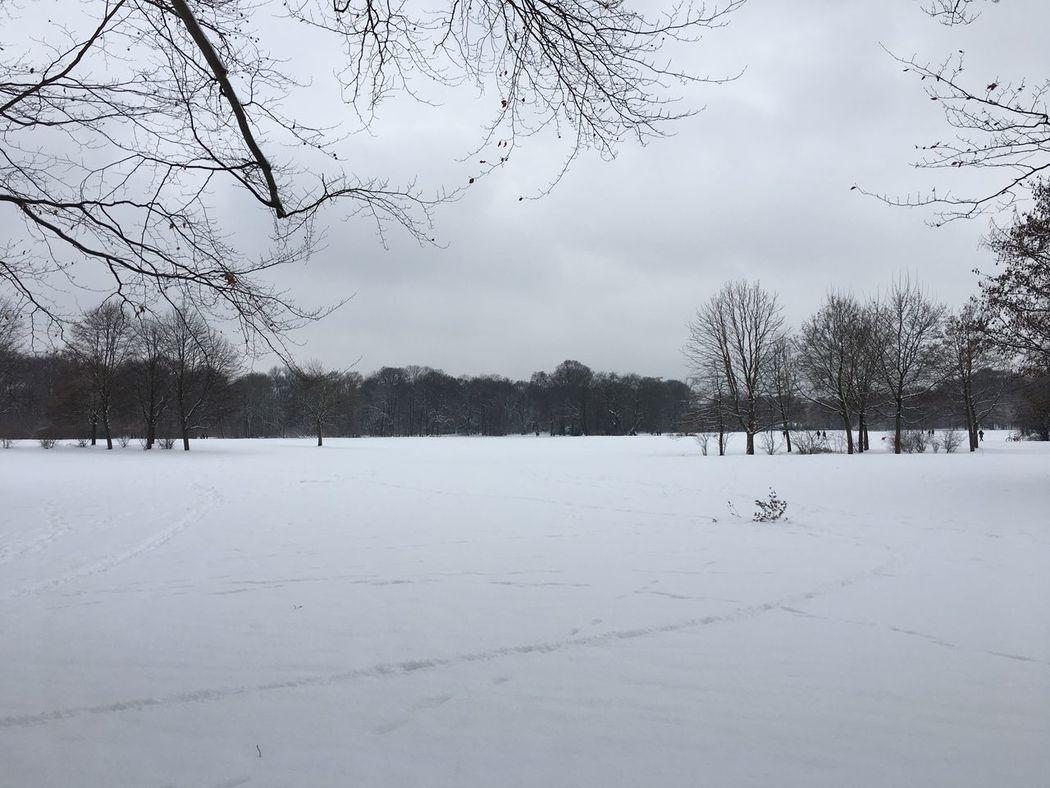 München englischer Garten im Winter Cold Temperature Snow Weather Winter Bare Tree Beauty In Nature