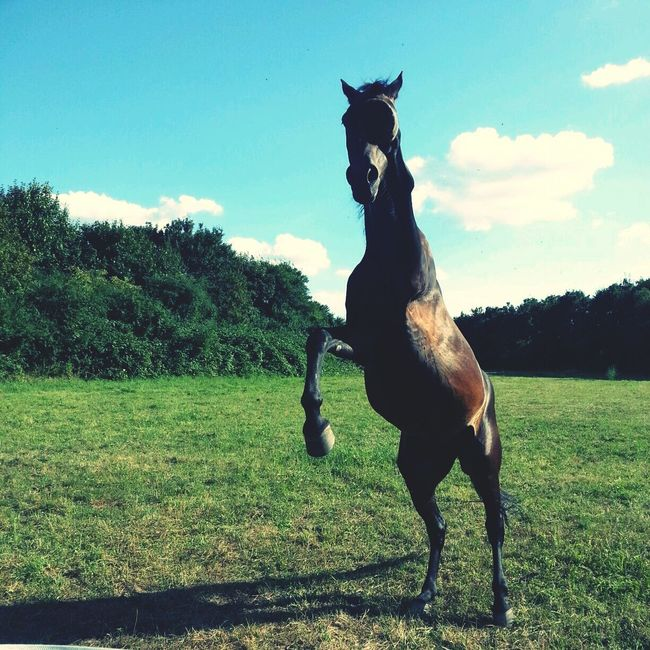 Omg My horse!!! :O Jumping Horse Field Check This Out