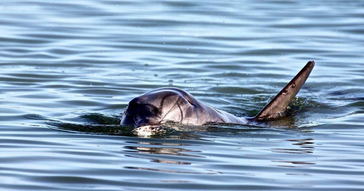 Dolphin Wildlife Australien Western Australia Animal Delfin Wildanimal Animal_collection Animal Love Animal Photography
