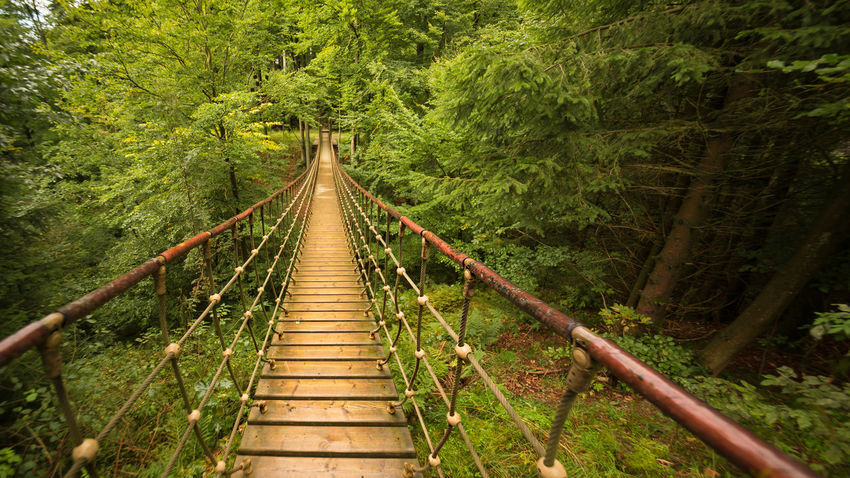 Rope bridgein the forest Excursion Go Nature Path Rothaarsteig Sauerland Schmallenberg Wood Wooden Bridge Adventure Bridge Cable Stayed Bridge Courage Footbridge Forest Growth Landscape Nature No People Outdoors Railing Rope Bridge The Way Forward Tree Way Connected By Travel Lost In The Landscape