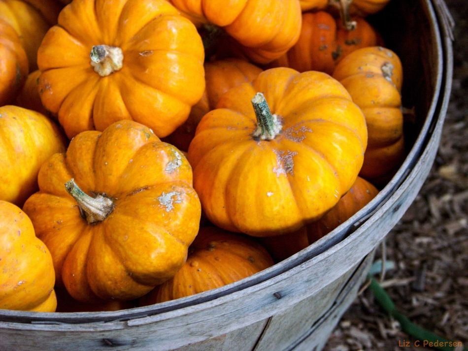Beautiful stock photos of pumpkin, Beauty In Nature, Bucket, Close-Up, Day