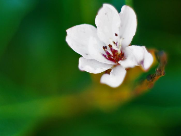 Beautiful Beautiful Nature Beauty Beauty In Nature Blooming California Close Up Close-up Day Flower Flower Head Fragility Freshness Growth Macro Macro Photography Maximum Closeness Moorpark Nature No People Outdoors Petal Plum Blossom Spring White Color
