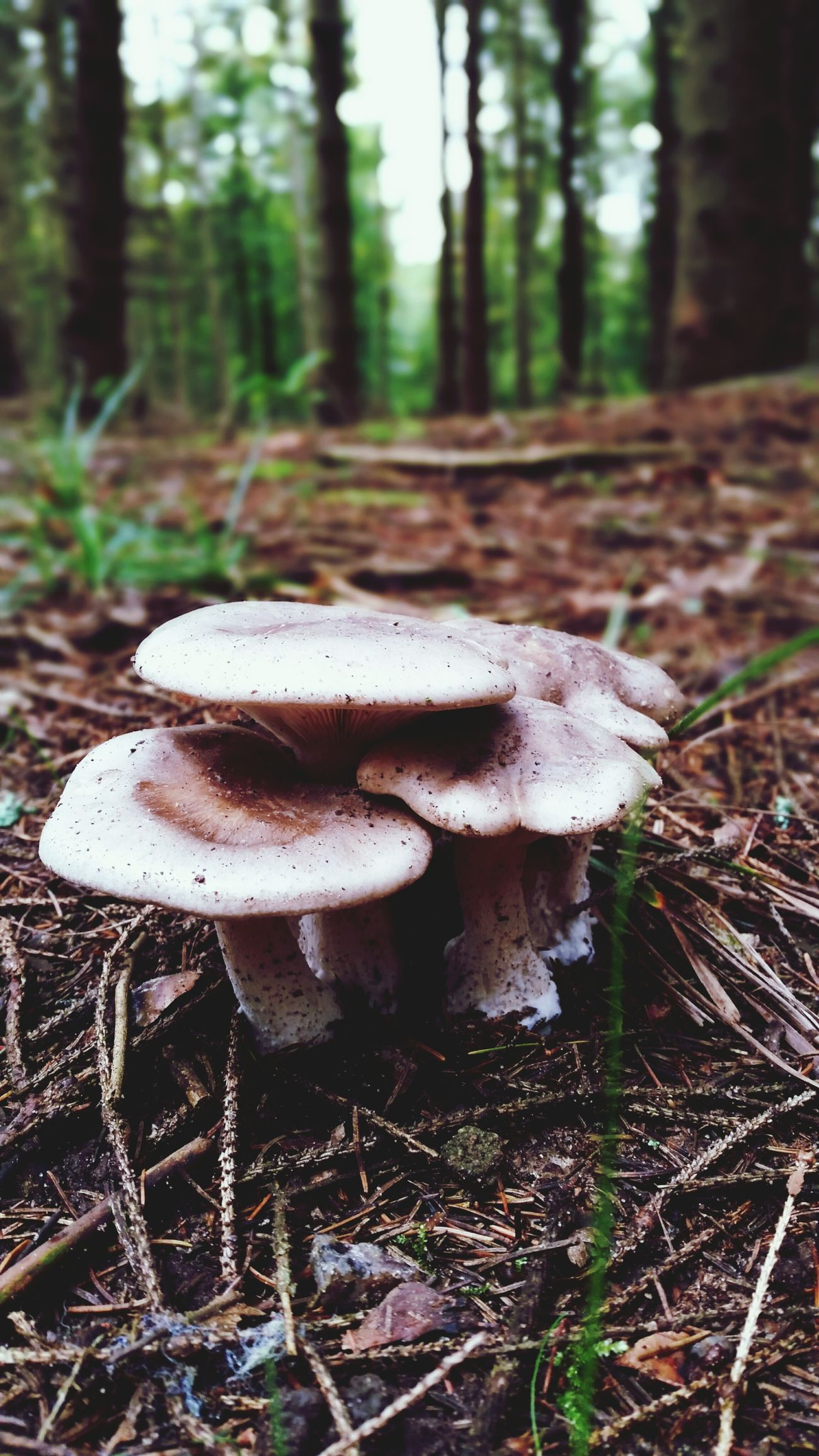 EyeEm Nature Lover Nature_collection Autumn Mushrooms