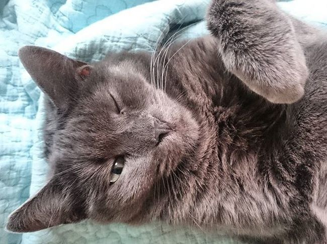 Ey, Mama, du sollst lernen statt mich beim schlafen zu stören! 😼 Jaaa, Tshagi-Girl, du hast recht... 😥 Tshaga_the_cat Prokrastination Mamarazzi