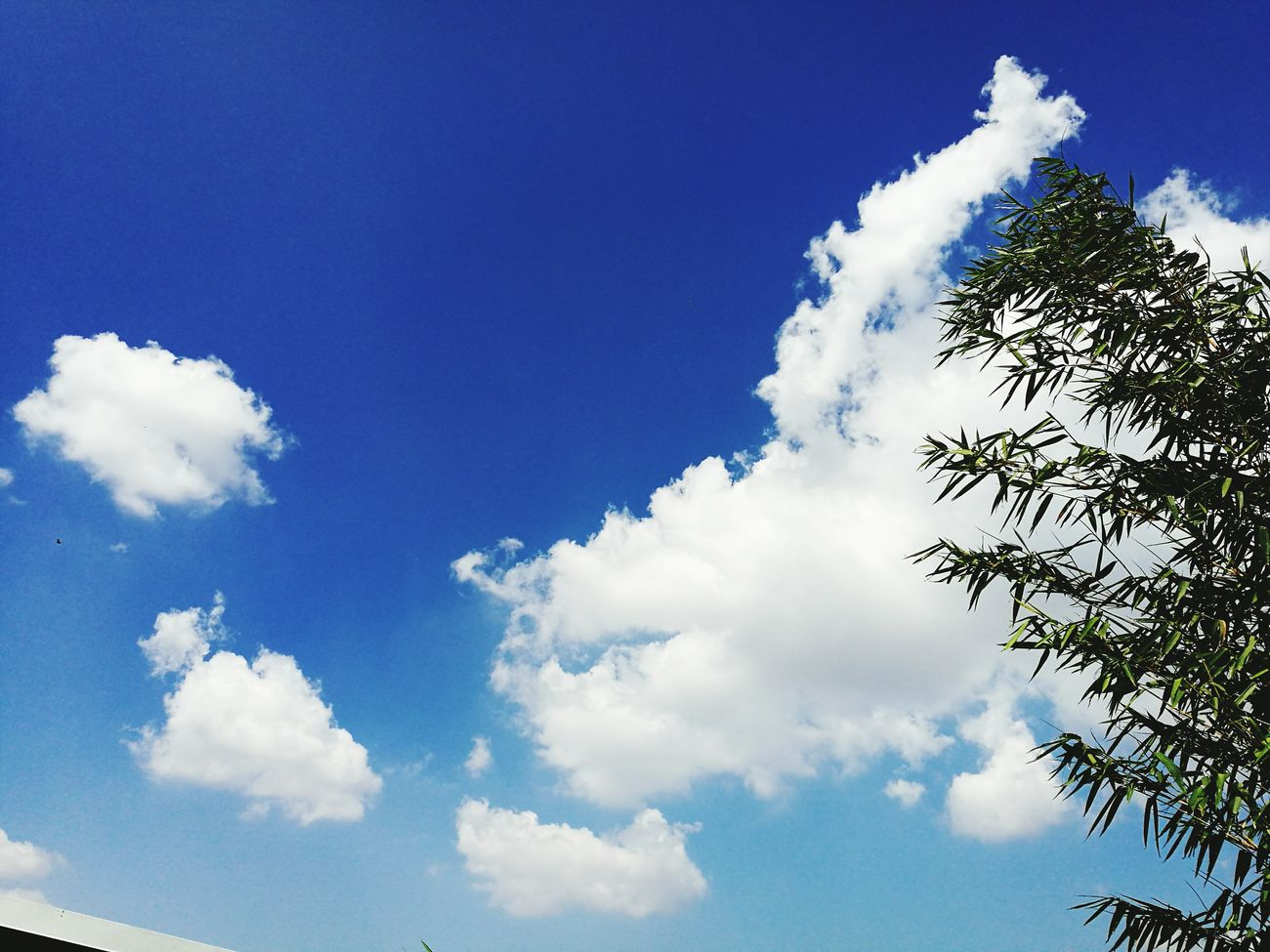 Air Cloud - Sky Blue Sky Bamboo - Plant Outdoors Nature Day No People Flowers,Plants & Garden Beauty In Nature Costa Rica Nature_perfection