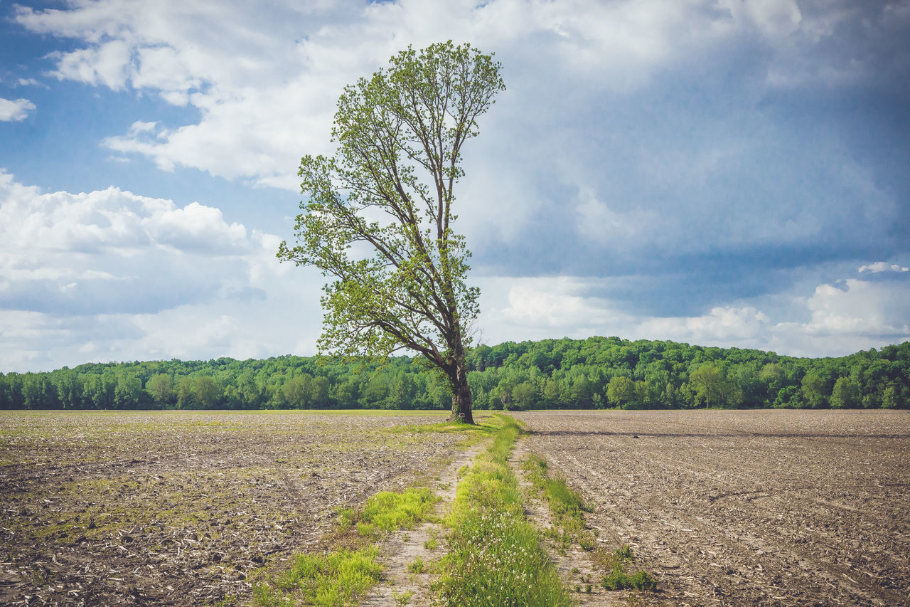 Agriculture Beauty In Nature Cloud - Sky Day Field Growth Landscape Nature No People Outdoors Plough Plowed Field Rural Scene Scenics Sky Tranquil Scene Tranquility Tree