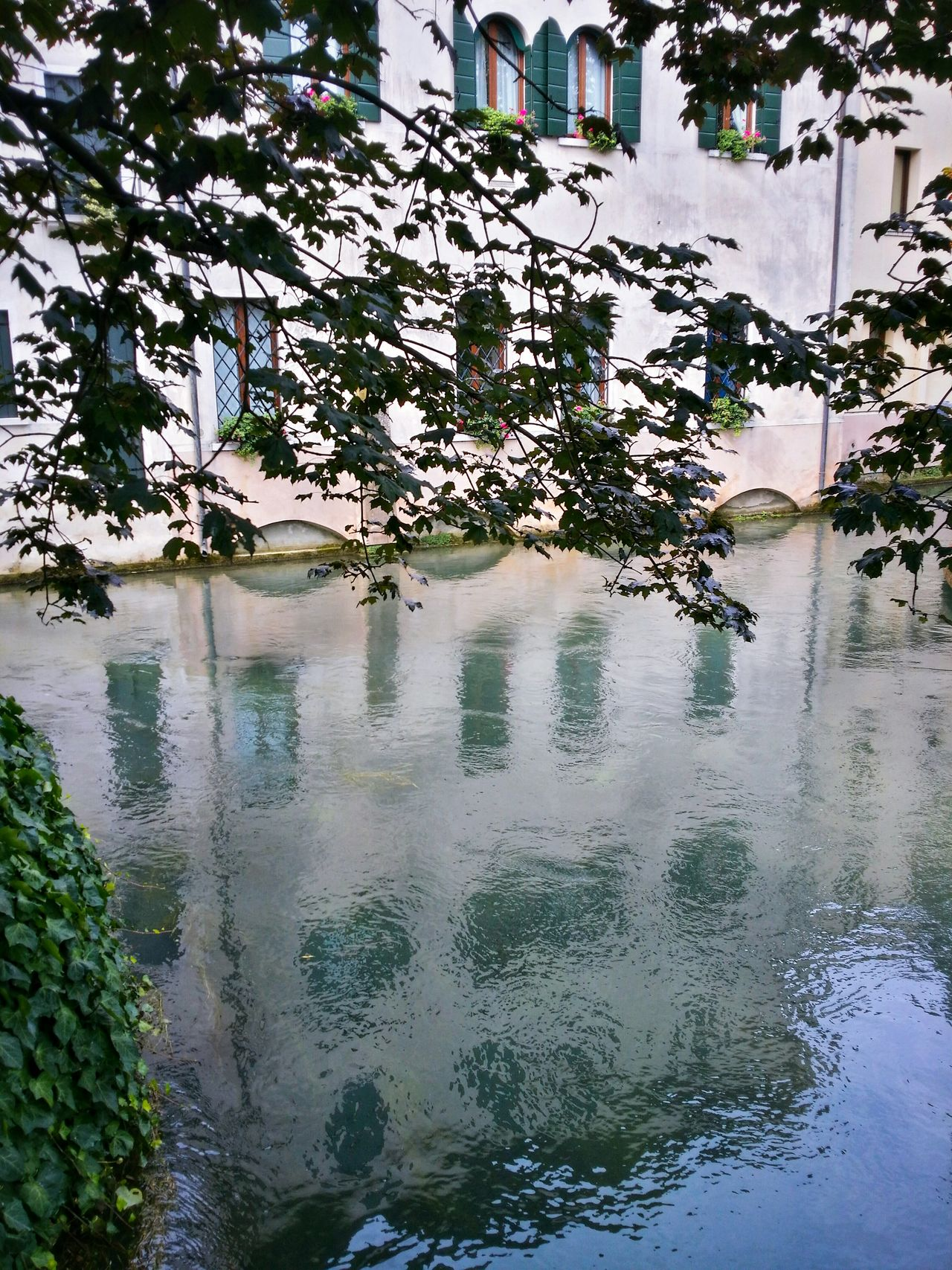 Late Summer Reflections Treviso Veneto Italy Travel Photography Travel Voyage Traveling Mobile Photography Fine Art Photography Historical Buildings Canals Water Flows Reflections And Shadows Stretched Tree Branches Architecture Window Patterns
