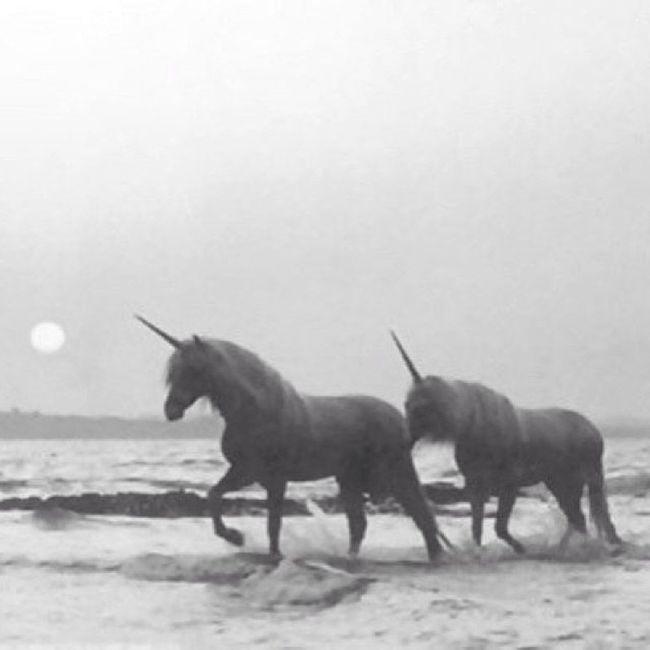We Believe In Unicorns! :)
