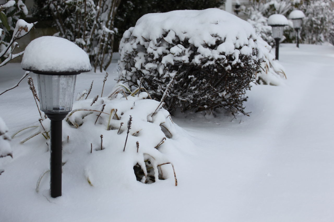 Cold Temperature Nature No People Outdoors Snow Snow Covered Snow Covered Garden Snow Covered Lantern Snow Day White Color Winter