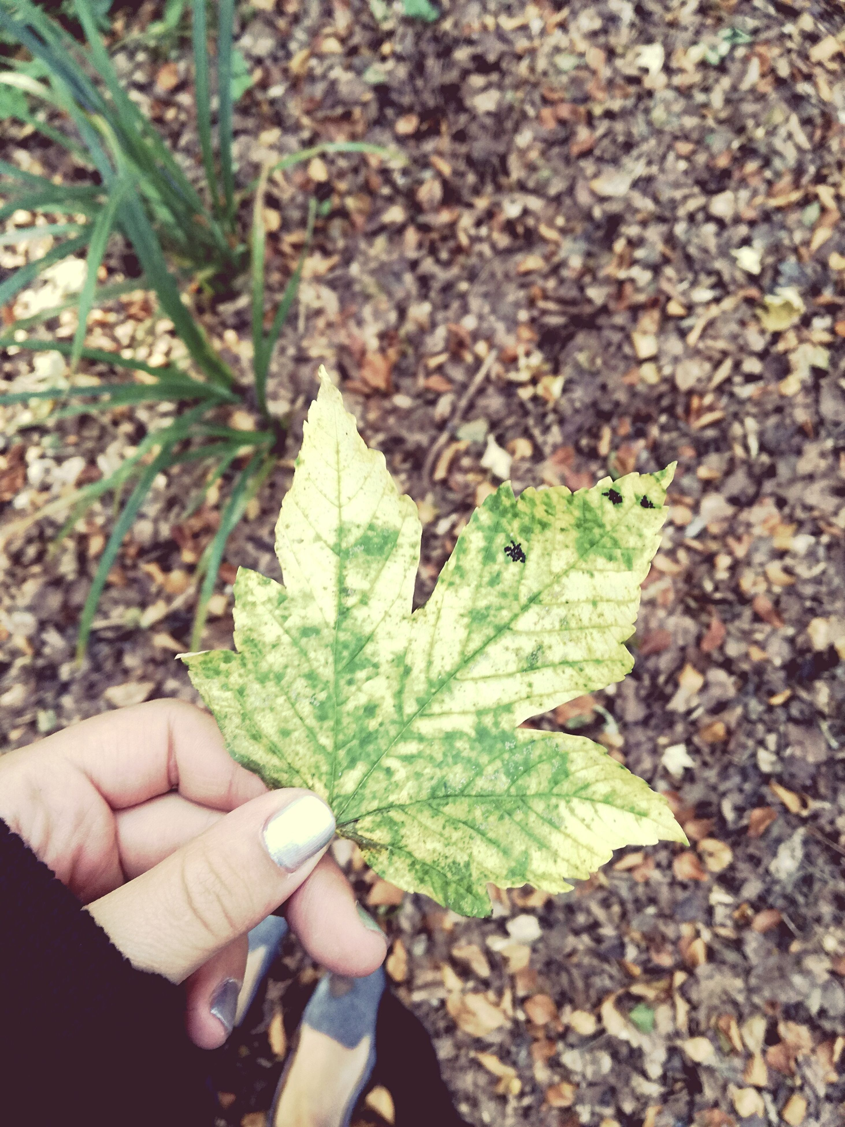 leaf, person, holding, close-up, leaf vein, green color, field, nature, fallen leaf, human finger, day, outdoors, personal perspective, tranquility, botany, focus on foreground, fragility, beauty in nature, freshness, green, contrasts
