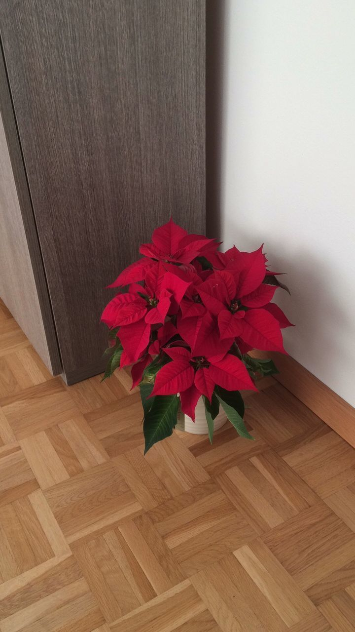 indoors, flower, no people, wood - material, hardwood floor, high angle view, home interior, red, day, fragility, nature, flower head, freshness, close-up