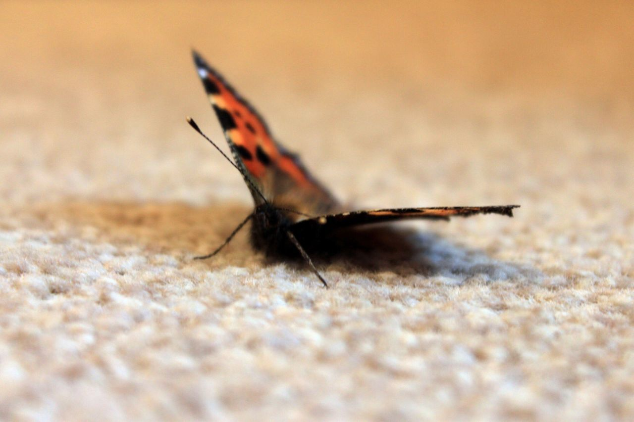 one animal, animals in the wild, insect, animal themes, selective focus, close-up, animal wildlife, no people, day, outdoors, nature