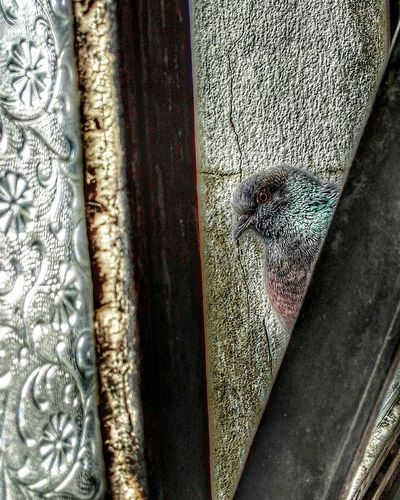 Pigeon Bird  Pigeonslife Pigeon Pose Pigeons Everywhere Pigeon Watching Birds Of EyeEm  Birds Eye View Windowframe