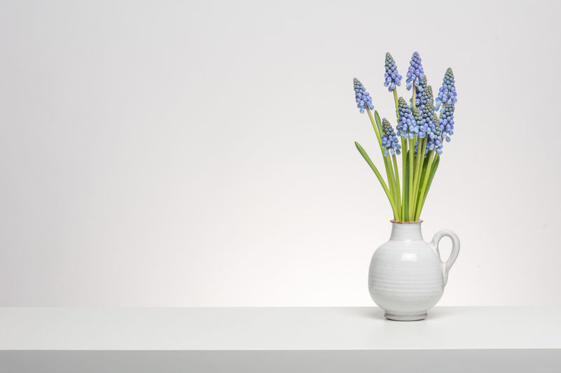 Bouquet of grape hyacinths in a white vase on a white shelf at a white background Copy Space Flower Freshness Grape Hyacinths Hyacinth Indoors  Interior No People Plant Vase White Background