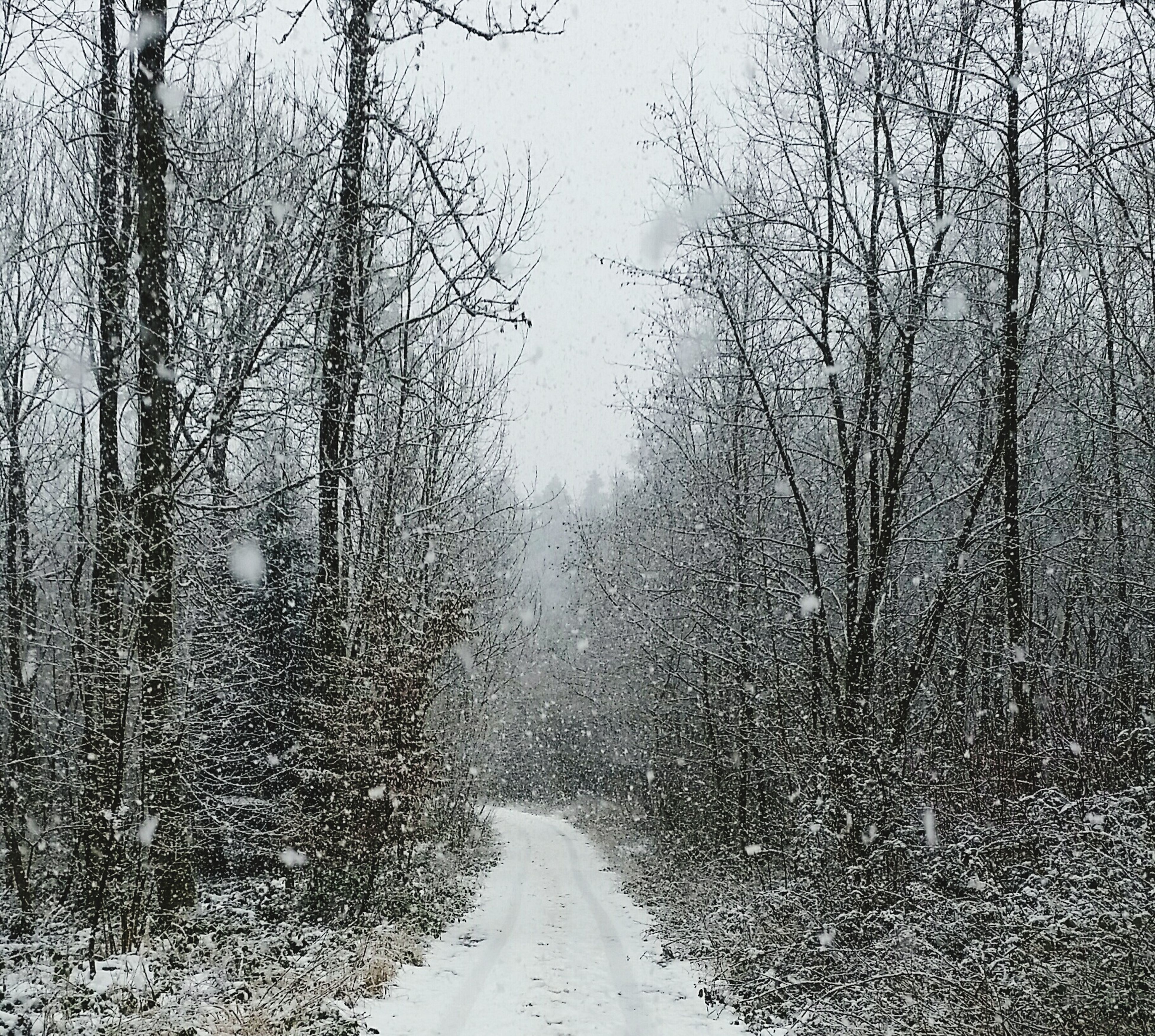 the way forward, weather, winter, diminishing perspective, transportation, tree, road, vanishing point, cold temperature, season, bare tree, snow, tranquility, fog, nature, tranquil scene, empty road, empty, scenics, day