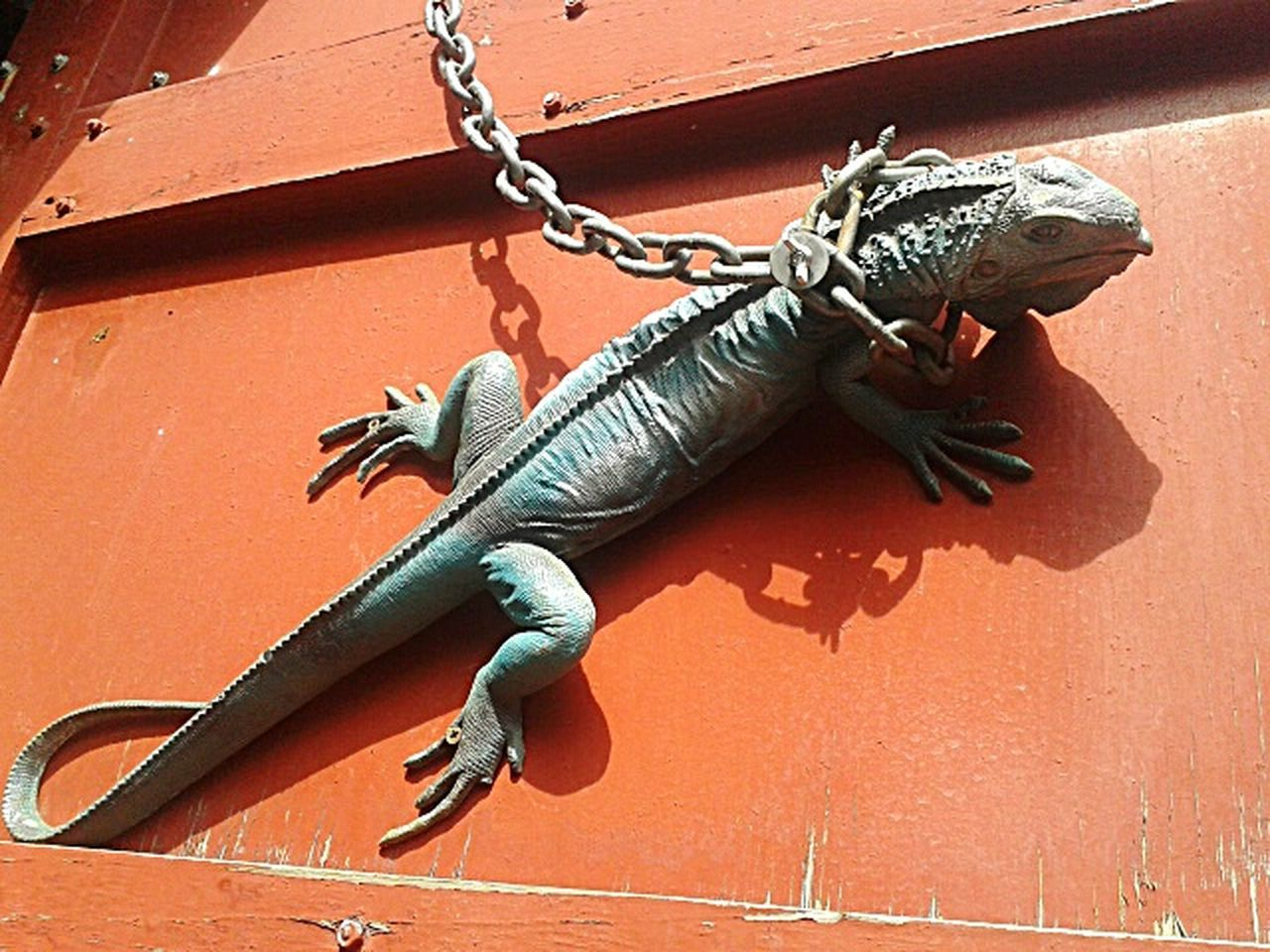 reptile, lizard, no people, day, one animal, iguana, animal wildlife, outdoors, animal themes, nature, close-up