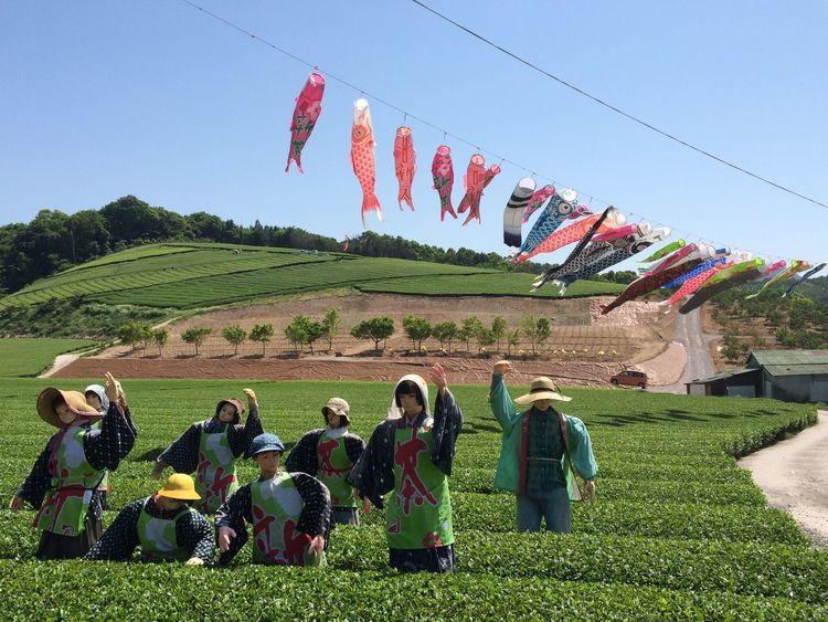 茶畑 鯉のぼり かかし Japan