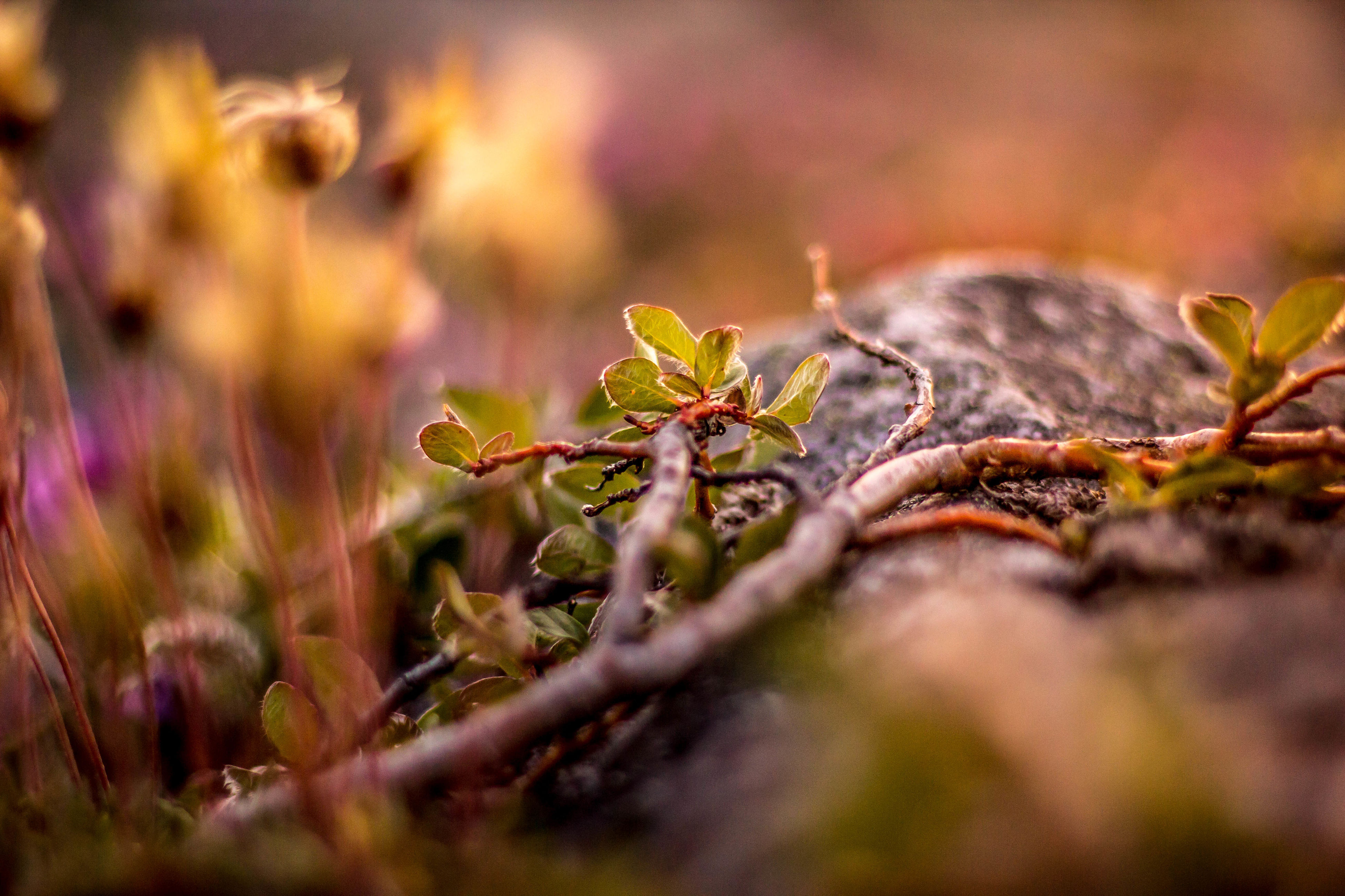 close-up, nature, plant, leaf, beauty in nature, growth, no people, outdoors, fragility, day, freshness