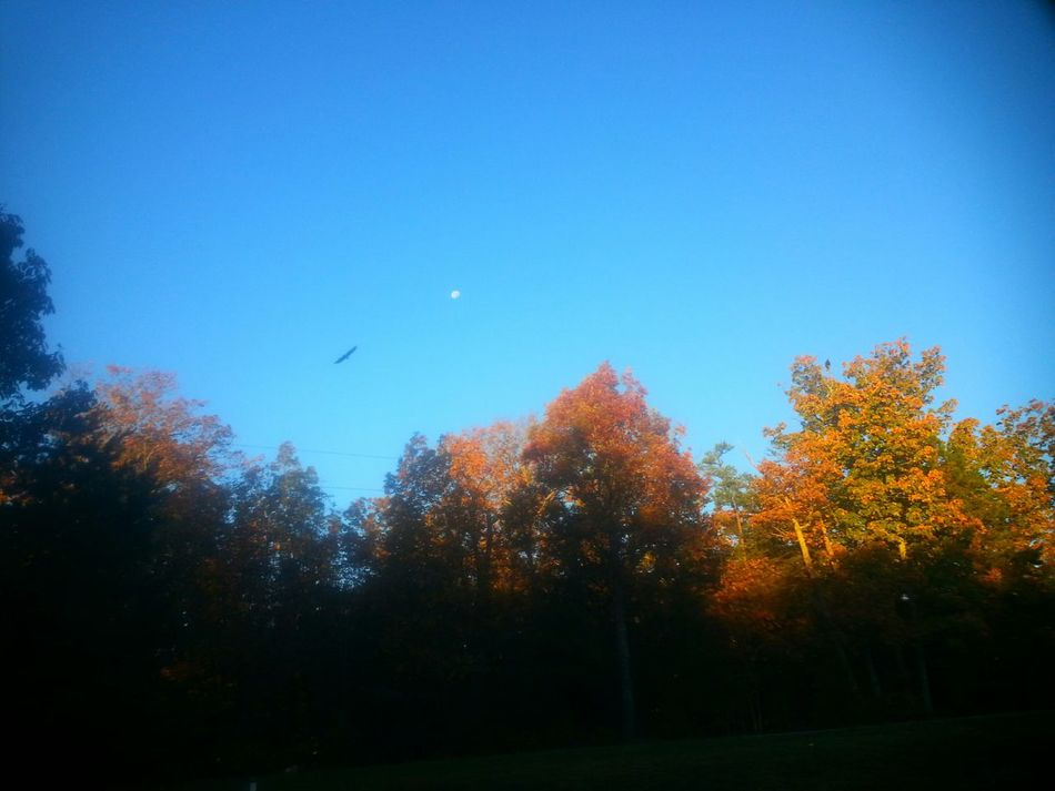 Morning Sky Moon Flying Birds Ducks And Geese United States Of America Gretna, Va Usa Virginia EyeEm Nature Lovers Tupponce Photography David Tupponce Autumn Colors Light And Shadows