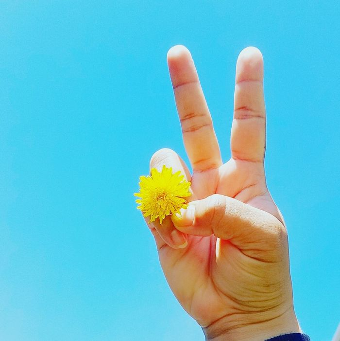 Peace and Love Human Body Part Human Hand Blue One Person Peace Peace ✌ Love Love Is In The Air Lovely Weather Lovely Day Flower Flowerpower Peaceandlove Beautiful Day Blueskies Day Yellow Flower Yellow Yellow Color Dandilion  Pickflowersnotfights