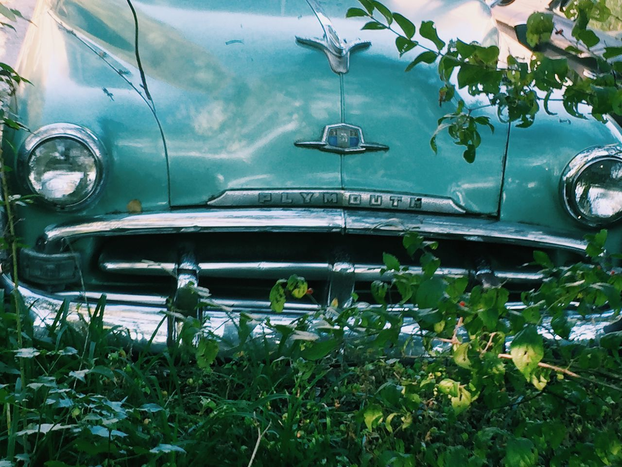 car, land vehicle, transportation, mode of transport, vintage car, headlight, old-fashioned, leaf, retro styled, day, green color, plant, outdoors, collector's car, close-up, no people