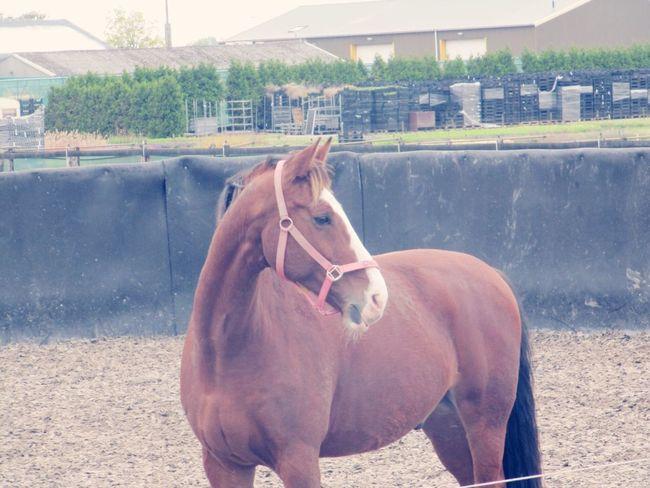 Zwier🦄 Pferde Pony Cute Horse Sweet Paard Lieffff Staljasper Pferd Manège  Paddock