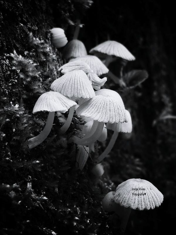En La Oscuridad Hongos  Beautiful Nature Blancoynegro Blanckandwhite Samsungphotography Samsung Galaxy Note 3 Fhotografy