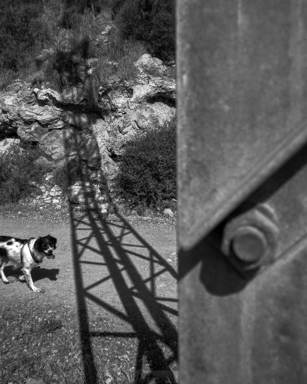 Portrait Of Dog Under Bridge On Sunny Day