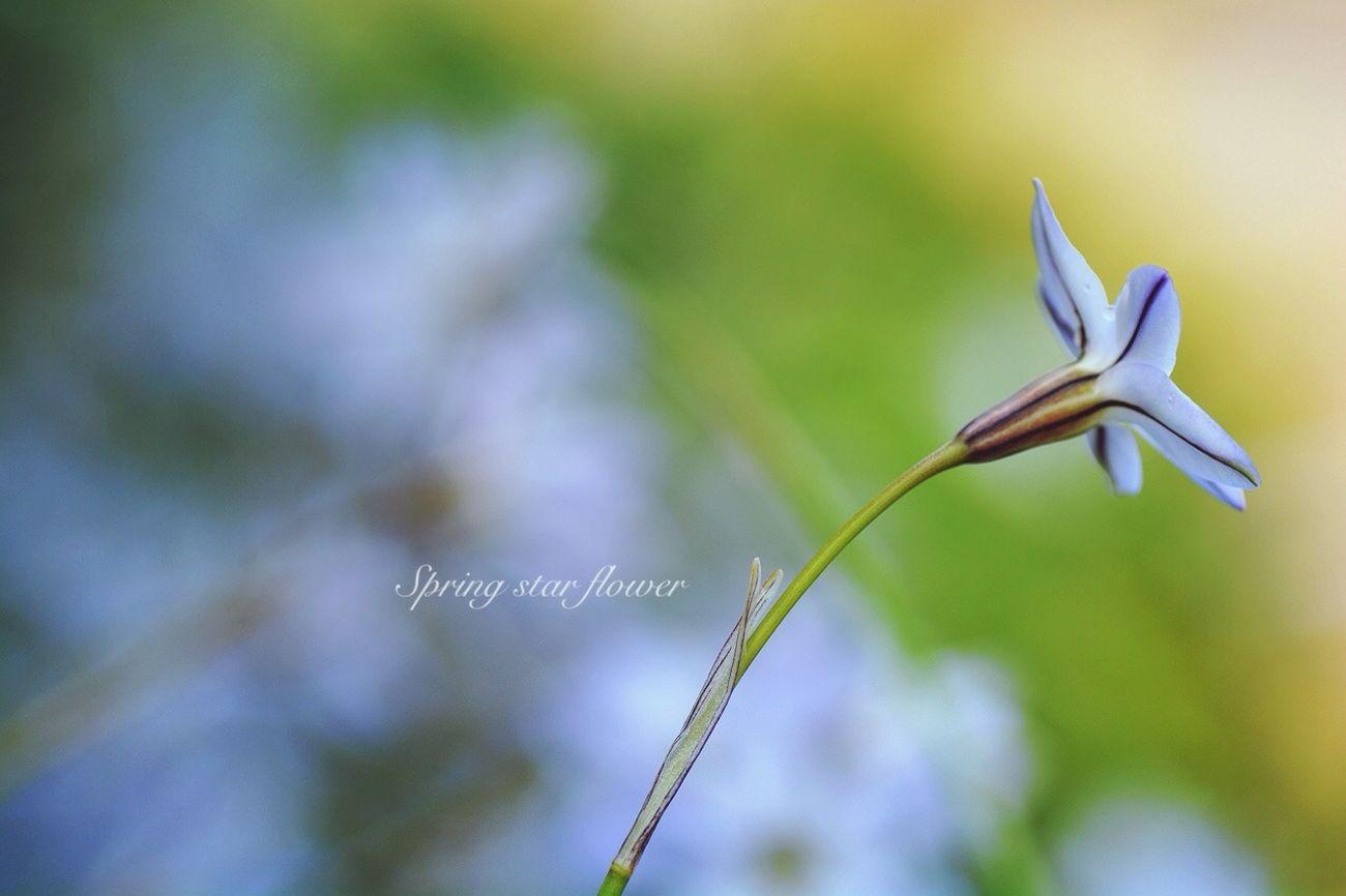 Japan EyeEm 2015 TAMROM Nikon D5200 Flower 花 庭に咲く花 花韮