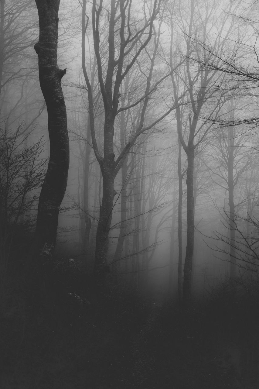 tree, tree trunk, bare tree, tranquility, nature, branch, tranquil scene, beauty in nature, landscape, fog, no people, forest, outdoors, hazy, day, scenics, sky