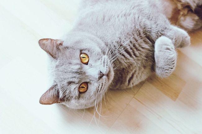 Cat Selfmade Cute Like Love Life Grey Germany First Eyeem Photo