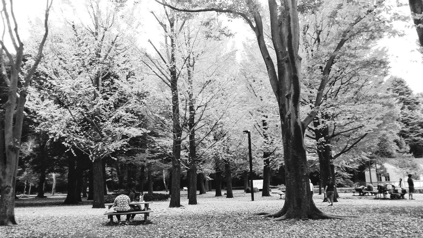 Autumn Colours Of Autumn Autumn 2015 Leaves Benches Yoyogi Park 1967 Nature Naturelover Enjoying Tokyo Urbannature Tokyonature Naturephotography Naturecollection Green And Yellow  Autumn Colours Tokyo Japan Travelphotography Bnw Bnwcollection Bnwphotography Bnw_tokyo Bnw_captures Nov2015