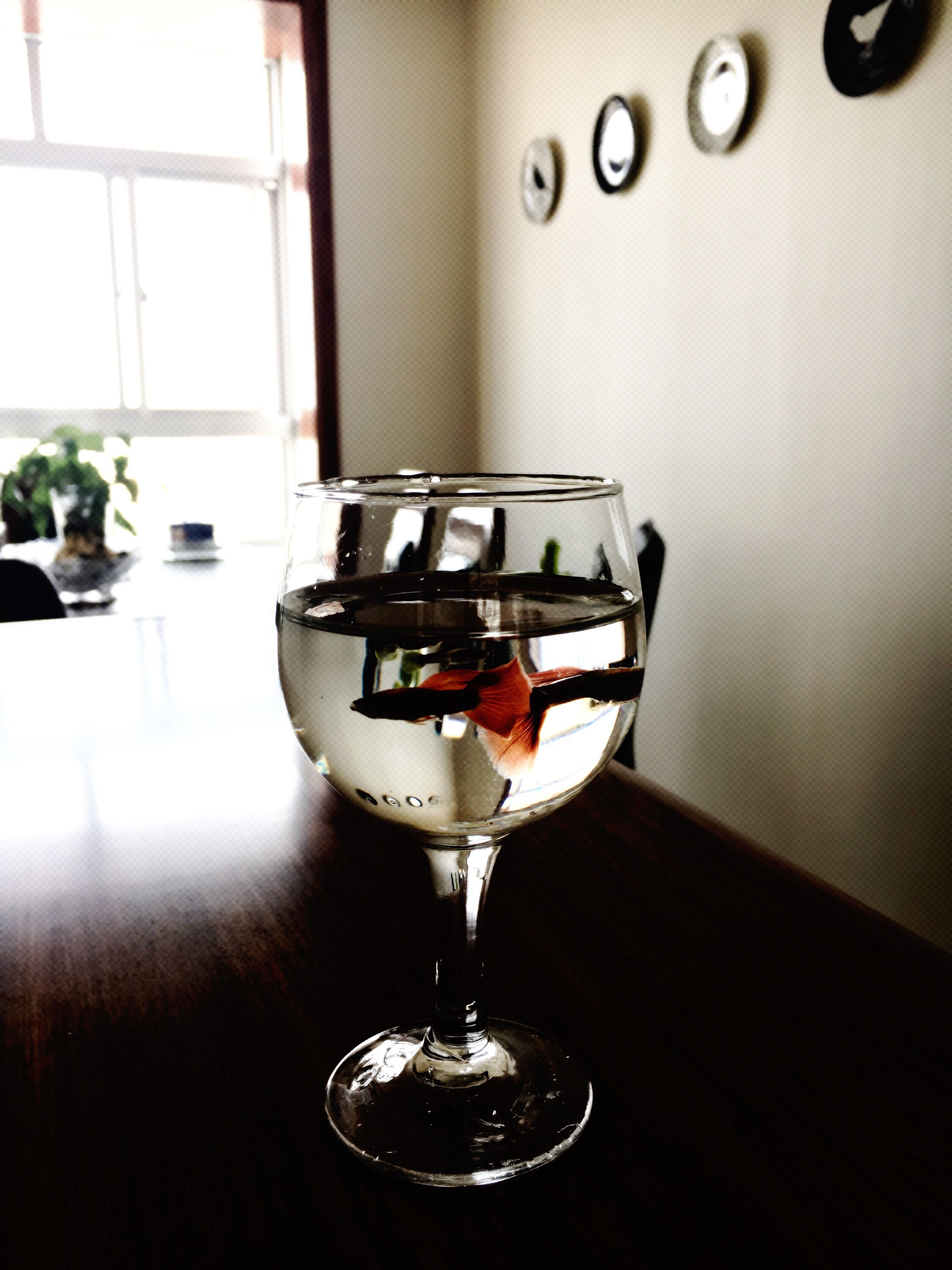 food and drink, wineglass, indoors, drink, alcohol, no people, red wine, wine, close-up, day