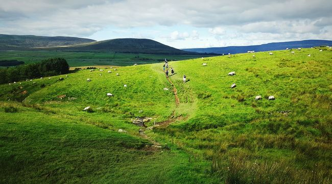 Walking in the dales Tranquil Scene Mountain Grass Tranquility Scenics Non-urban Scene Landscape Green Color Mountain Range Sky Beauty In Nature Cloud - Sky Nature Growth Green Field Cloud Grassy Outdoors Day Yorkshire Dales People And Places