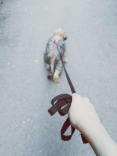 Собака Лето2015 кхс Прогулка в парке омск