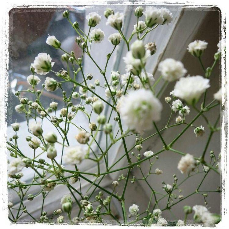 Ig_europe Ig_russia Ig_moscow Estaes_flores Estaes_de_todo Flores Flowers Blanco Ok_flowers Pic_at_home Lovers_home4 Detalhes_em_foco цветы Детали