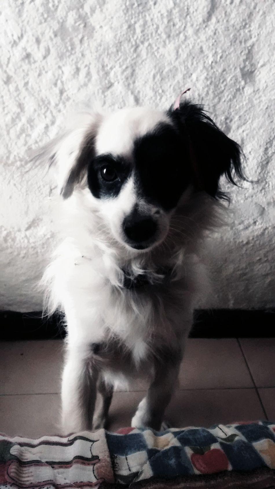 Hi! Hello World Check This Out Ilovemydog