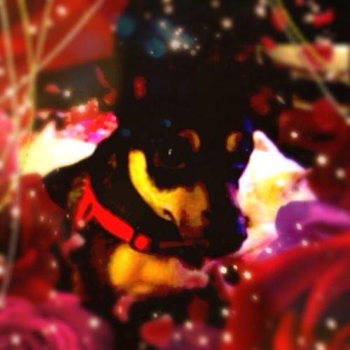 My Dog (Holland)