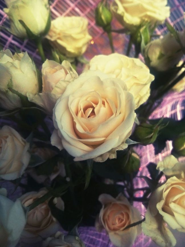 Photo Hello World Good Morning Flowers Roses Rose♥